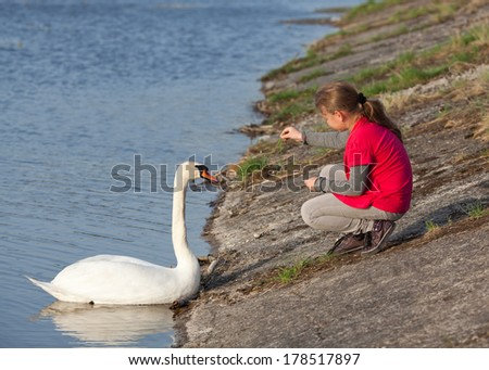 Little girl feeding swan, at riverbank - stock photo