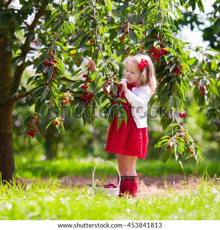 Little girl in picking cherries in an orchard. - stock photo