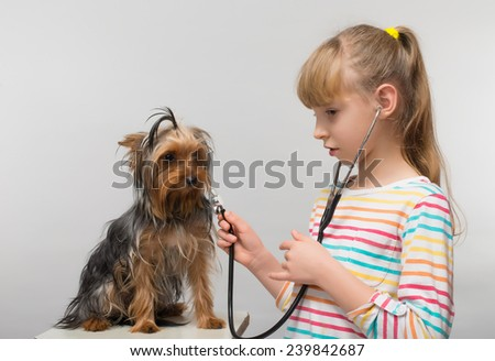 little girl listens to a stethoscope puppy Yorkshire Terrier - stock photo