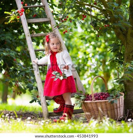 Little girl picking cherries on a fruit farm.  - stock photo