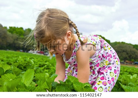 Little girl picking strawberries on a field - stock photo