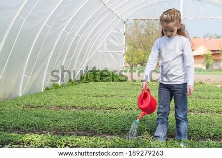 little girl watering seedlings Tomato - stock photo