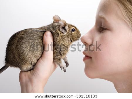 little girl with degu hamster in hands profile side view portrait isolated on white - stock photo
