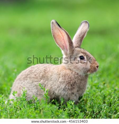 little gray rabbit on green grass background - stock photo