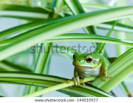 Little green frog - stock photo