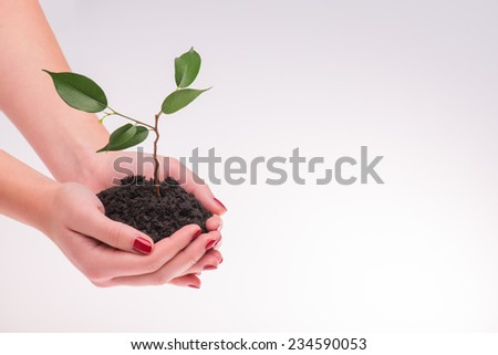 Little green plant in the hands of woman isolated on white background. Concept of new life - stock photo