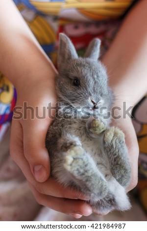 Little grey bunny rabbit - stock photo