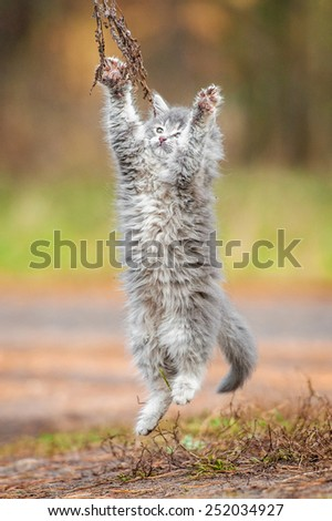 Little grey kitten playing outdoors - stock photo