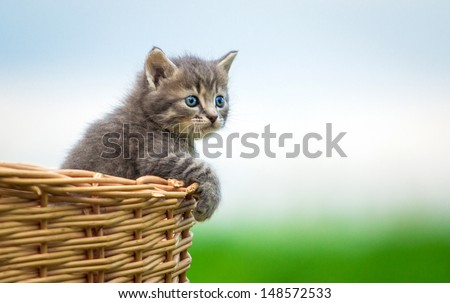 Little grey kitten sitting in the basket - stock photo