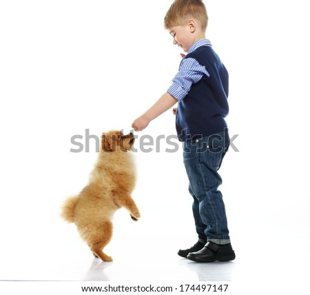 Little happy boy playing with spitz isolated on white background  - stock photo