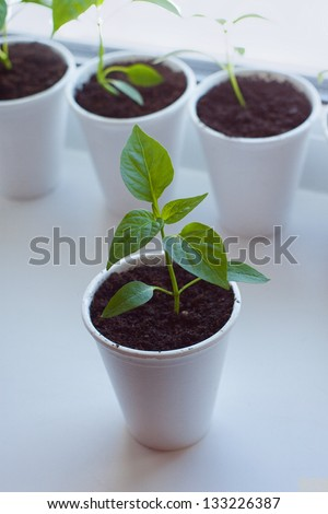 Little home garden in the city - stock photo