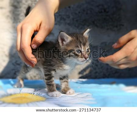 Little homeless kitten in the hands of a volunteer - stock photo