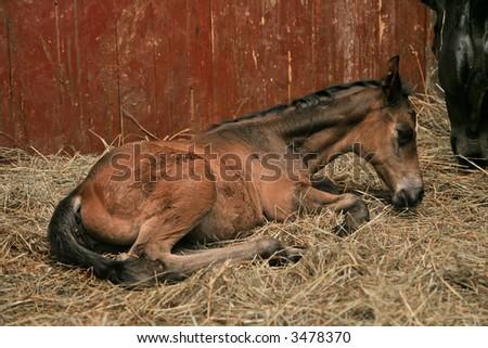 Little horse - stock photo