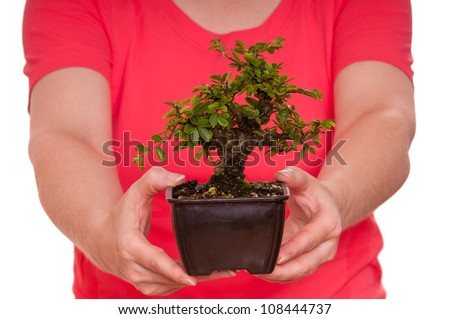 Little japanese elm (Ulmus japonica) are holding from two female hands - stock photo