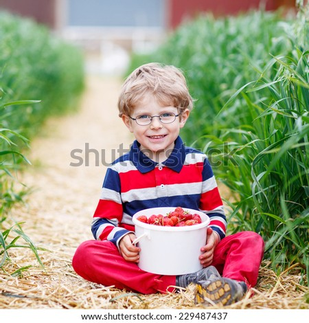 Little kid boy in glasses picking and eating red ripe strawberries on organic pick a berry farm in summer, on warm day. - stock photo