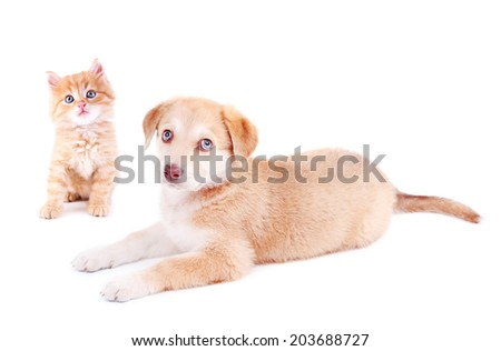 Little kitten and retriever puppy isolated on white - stock photo