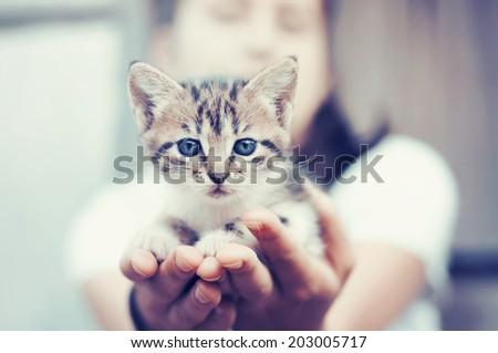 Little kitten held in hands, vintage toned. - stock photo