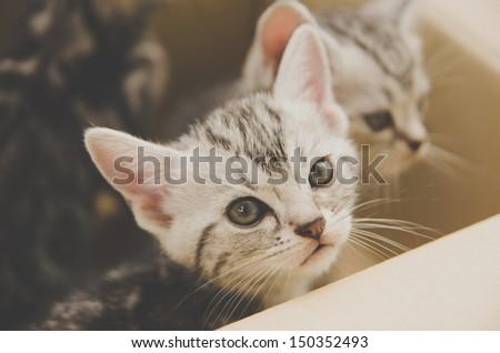 little kitten in  box - stock photo