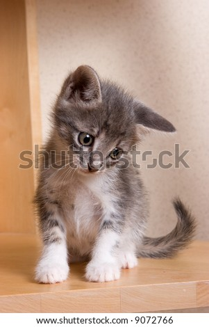Little Kitten in house - stock photo