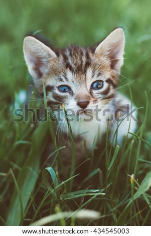 little kitten in the grass - stock photo