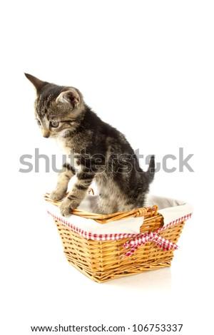 Little kitten in wooden cane basket isolated over white - stock photo