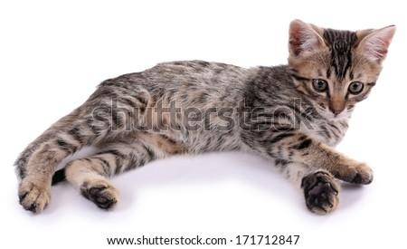 Little kitten isolated on white - stock photo