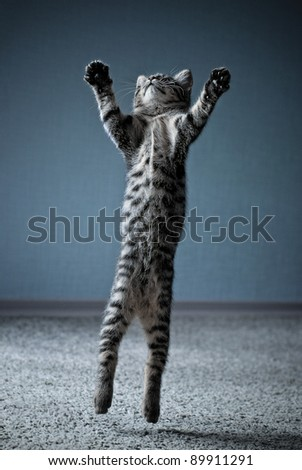 Little kitten jumping with widely spread paws - stock photo