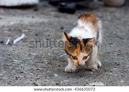 Little kitten looking for a home - stock photo