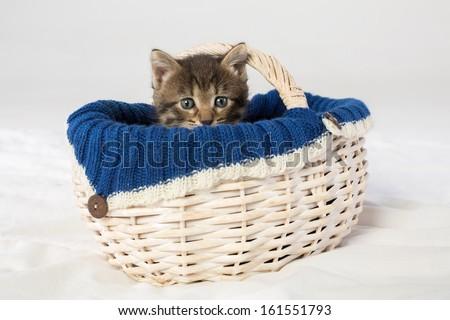 Little kitten looking out of a wicker basket - stock photo