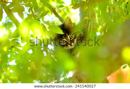 little kitten on a tree - stock photo