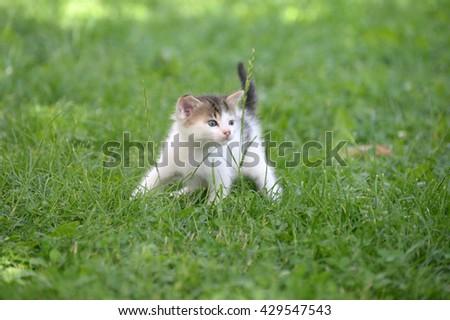 Little kitten play in the grass - stock photo