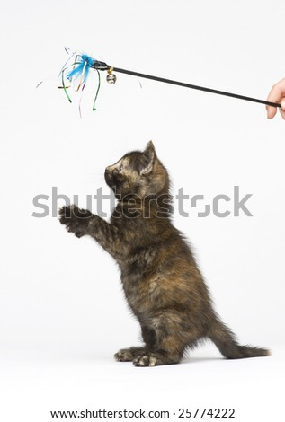 Little kitten playing with toy - stock photo
