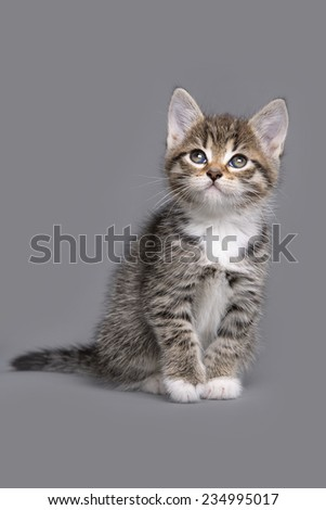 little kitten sitting in front of a grey background - stock photo