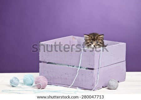 little kitten sitting in purple box with yawn ball - stock photo