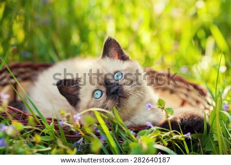 Little kitten sitting in the basket on the grass - stock photo