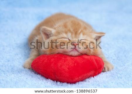 Little kitten sleeping on the red heart-shaped pillow - stock photo