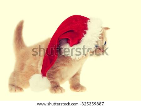 Little kitten wearing santa hat - stock photo