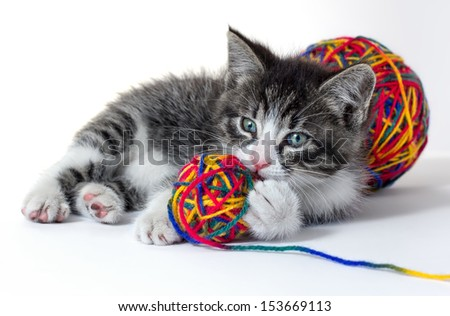 Little kitten with a ball of yarn  - stock photo