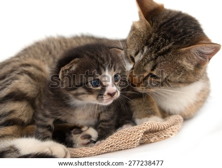 little kitten with a cat - stock photo