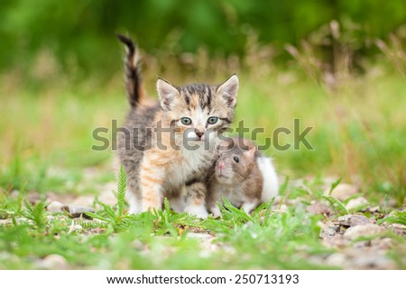 Little kitten with a mouse - stock photo