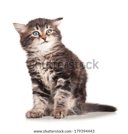 Little kitten with emotion of disgusting  isolated on white background  - stock photo