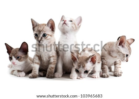 Little kittens isolated on the white background - stock photo