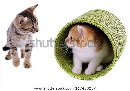 Little kittens isolated on white - stock photo