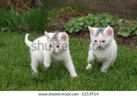 Little kittens looking for trouble - stock photo