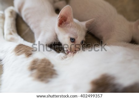 Little Kitty drinking milk form its mom - stock photo