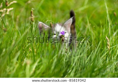 Little kitty for a walk in the tall grass. - stock photo