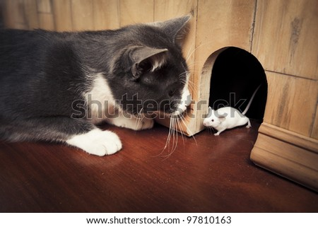 little mouse coming out of it's hole - stock photo