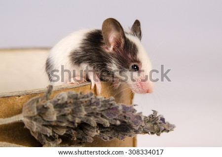 Little mouse stained - stock photo