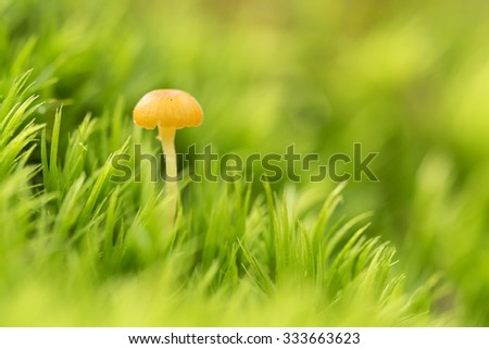 Little mushroom on the moss, macro ( selective focus ) - stock photo