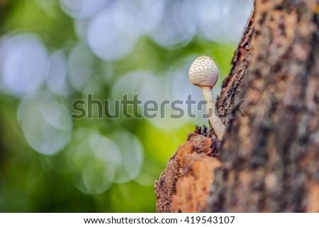 Little mushroom or fungus grow on a birch tree - stock photo